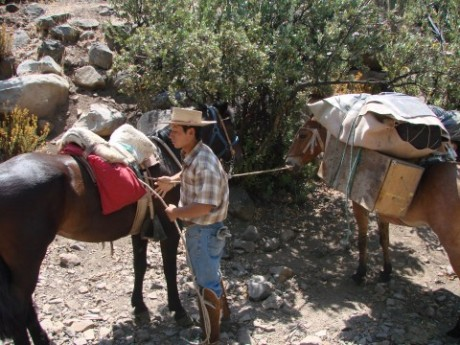 Preparing horses and mules on a camping trip in the Andes