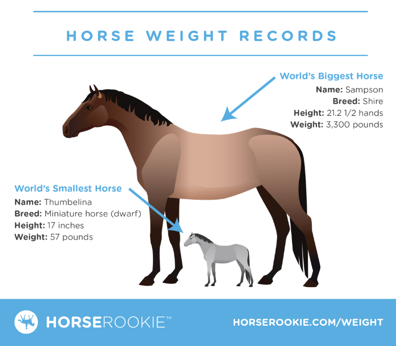 How much does a horse weigh? (Fun facts, calculator, FAQs)