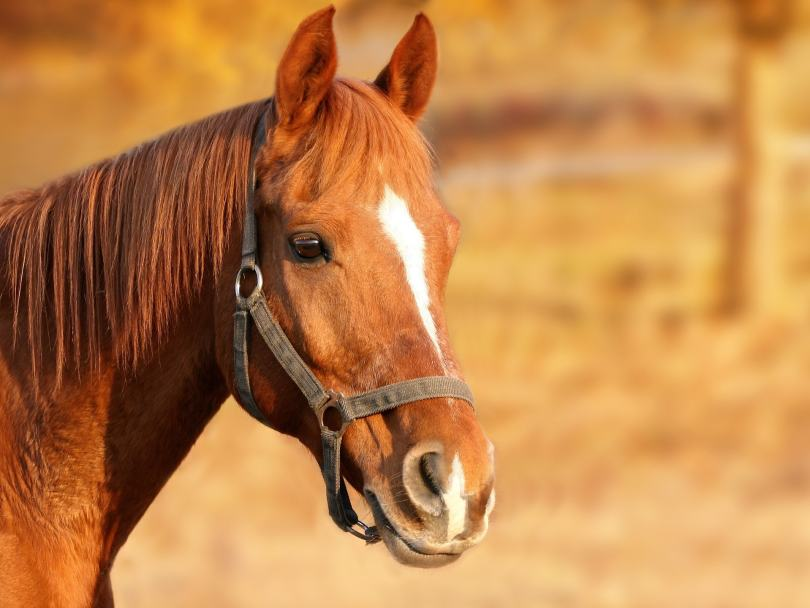 horse photo focal point