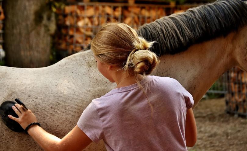 horse grooming girl