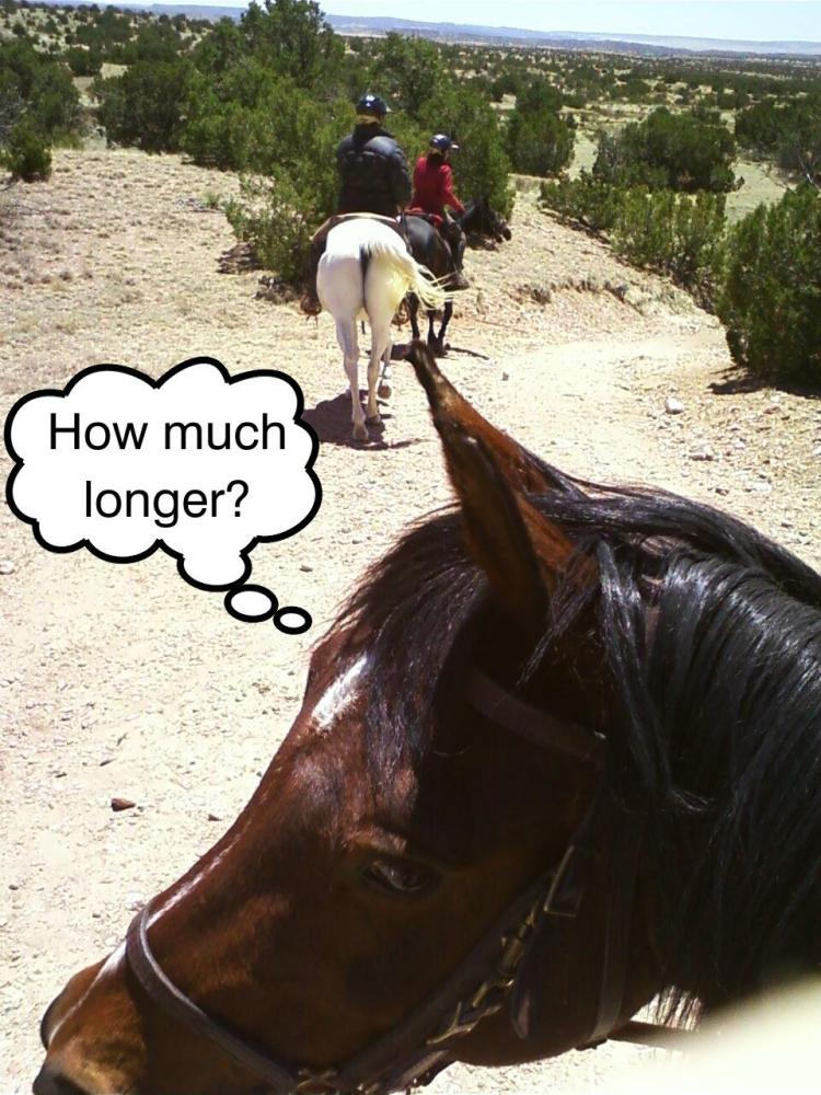 When should I stop riding my older horse? (4/4)