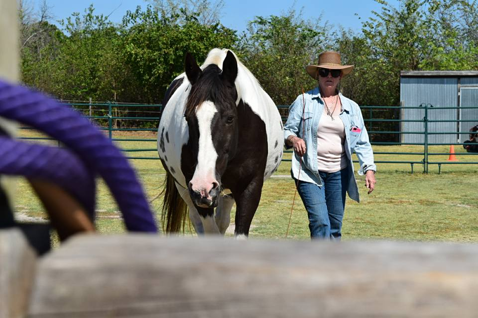 Support groups for people and their horses (1/6)