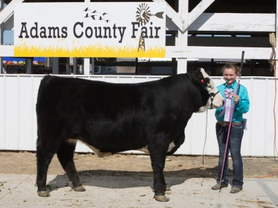 Anna and her Reserve Ch Market and Grand Ch Fitting and Showing Steer