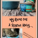 My Great Cat – A Rescue Story