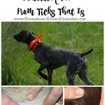 Your Dog Needs Protection Too…From Ticks That Is #12Bravecto