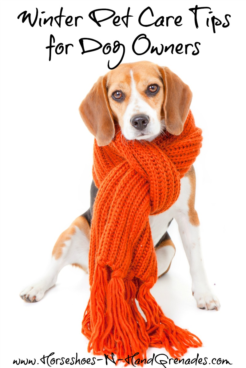 winter-pet-care-tips-12bravecto
