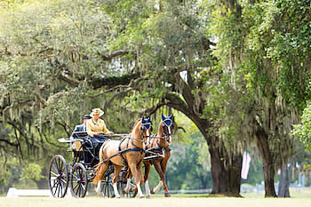 Live Oak International Underway with Show Jumping and Driving Competition