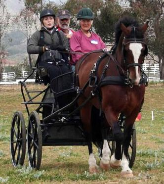 Para-Equestrian Developing Driver Clinic Featured Top Clinicians
