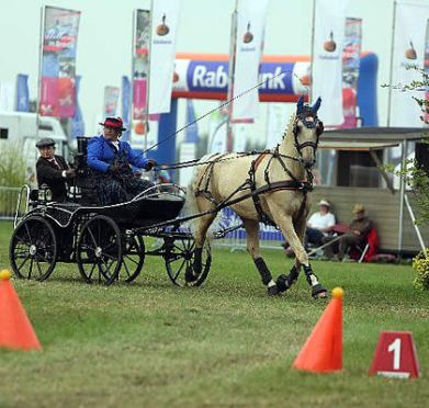 Tomorrow Begins United States Driving for the Disabled Free Para-Equestrian Developing Driver Clinic