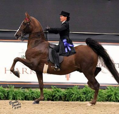 American Saddlebred Five-Gaited Swap Premieres at Alltech National Horse Show