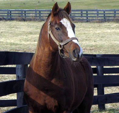 American Derby Winner The Name's Jimmy Euthanized at Old Friends