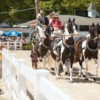A Four-In-Hand carriage in the Dixon Oval for judging. Photo © Brenda Carpenter