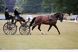 Sandringham Estate Hosts Successful FEI World Para Equestrian Driving Championships