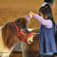 Kids get the chance to get up close to the ponies