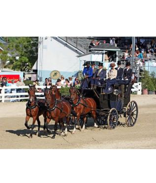 Coaching Competition Showcased at Devon Horse Show and Country Fair
