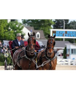 Harvey Waller Wraps Up Horse Pairs Championship