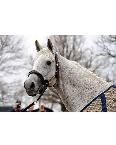 July   2015   Horses in the South – A Horse Blog   Page 2