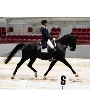 Jacksonville Equestrian Center's Ride Lite Dressage Show Gives Competitors a First-Rate Experience