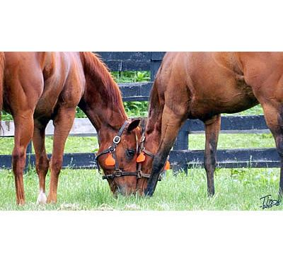 September 7th Is Old Friends Day at Belterra Park