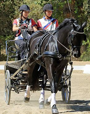 Drivers Complete USEF High Performance Para-Driving Clinic in California