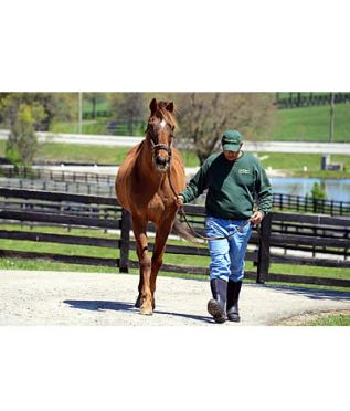 Graded Stakes Placed Mixed Pleasure Euthanized at Old Friends