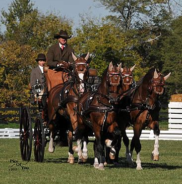 Team Weber Sets Winning Tone in Dressage as Hermitage Classic CDE and Fall Festival Opens