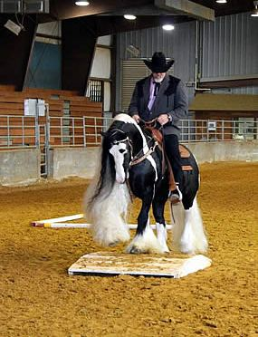 The Amazing Feathered Horses Set to Show Off at the Jacksonville Equestrian Center