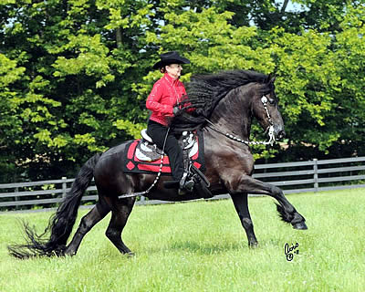 Friesian Owners Get Boot Camp Training with World Champion Jannie Giles