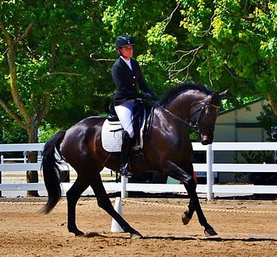 Trainer Returns from Germany, Partners with USA Breeder to Qualify for USDF Championship