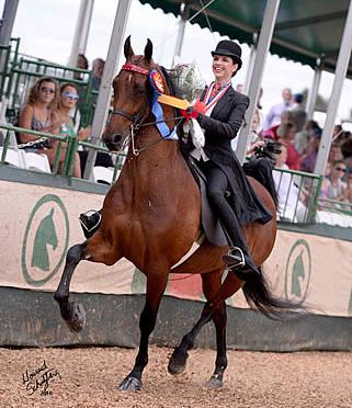 Upton Earns 2016 USEF Saddle Seat Adult Amateur Medal Final Title