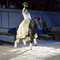 A bridleless dressage presentation set to the music of Forrest Gump