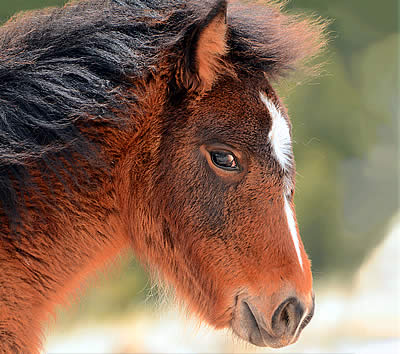 BLM Director Announces No Killing of Wild Horses in Holding