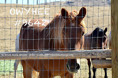 Secret Documents Reveal Plot to Kill Mustangs