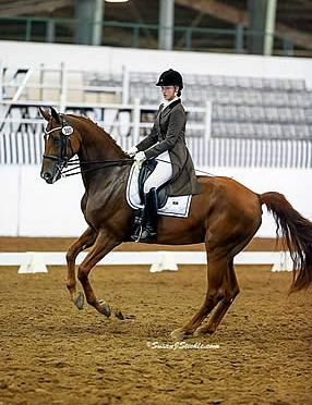 Houston Dressage Society Hosts Another Outstanding USDF Region 9 Championship Show