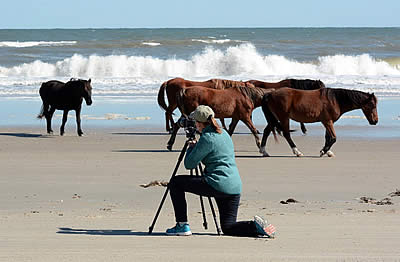 Wild Horses of Sea and Sand