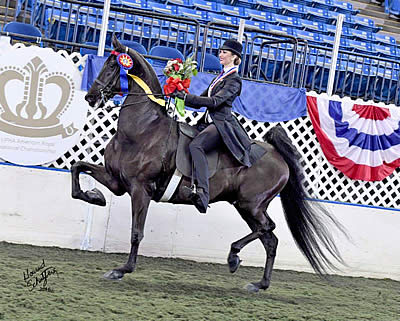 Macey Miles and Harlem's Wild and Wonderful Earn Triple Crown of Saddle Seat Equitation
