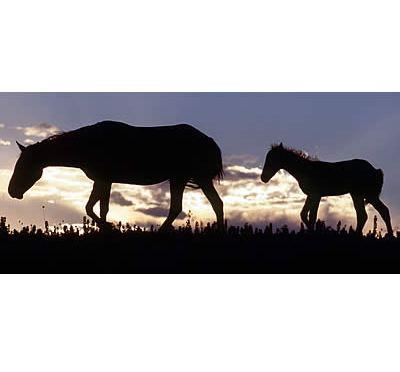 No Land. No Horses.