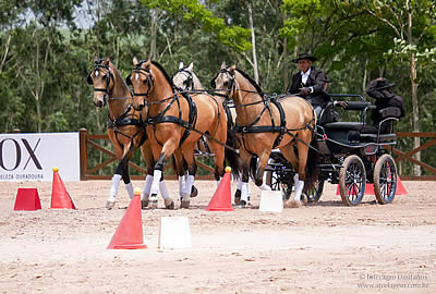 Interagro Lusitanos Wraps Up 2016 with Wins in Driving, Dressage, Paradressage, Working Equitation