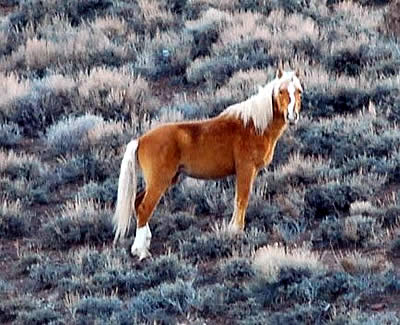 Mining Threatens Three Wild Horse Herds