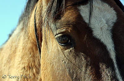 Wild Horses and Burros Need Your Voice TODAY