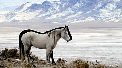 Utah Wild Horses Need Your Help