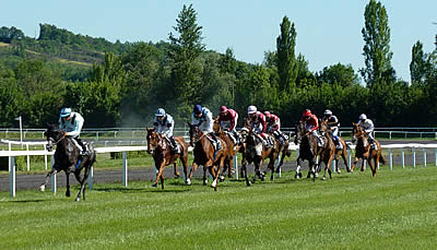 Place Your Bets – A Beginner's Guide to Horse Race Betting