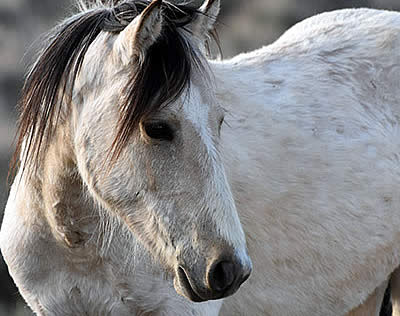 BLM Wild Horse & Burro Meeting: CANCELLED