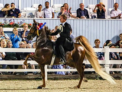 American Saddlebreds Scheduled to Showcase Beauty and Versatility at Devon Horse Show
