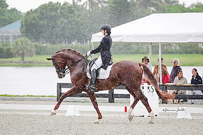 Gold Coast Dressage Association's May Dressage Show Outshines the Rain