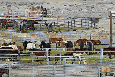 Speak Up to Save Horses and Burros from Slaughter