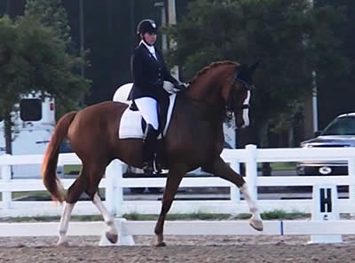 Jacksonville Equestrian Center Kicks Off Busy Month with Ride Lite Dressage Show