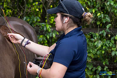 Unparalleled Support: The Role of Veterinary Technicians at Palm Beach Equine Clinic