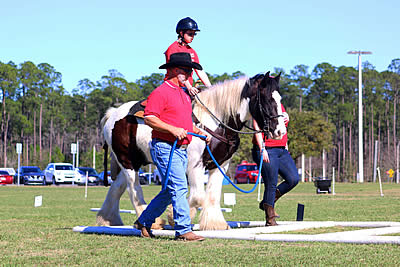 Jacksonville Equestrian Center Hosts Special Olympics and Dressage Event