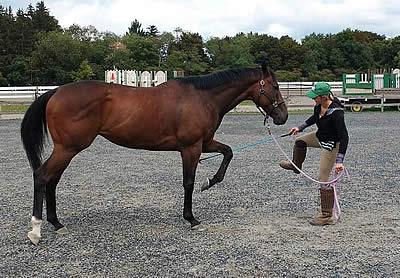 USA Equestrian Trust Opens 2019 Grants Program for Equine Non-Profits